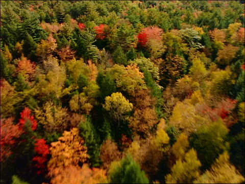 AERIAL red barn in field + forest in Autumn / New England