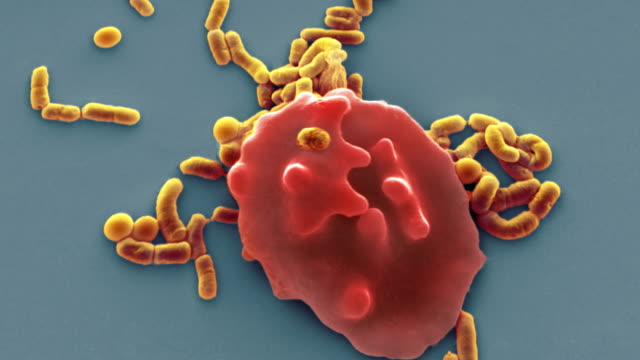 red blood cell and bacteria, sem - bacterium stock videos & royalty-free footage