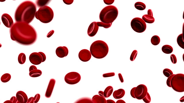 vídeos y material grabado en eventos de stock de red blood cells - animación biomédica