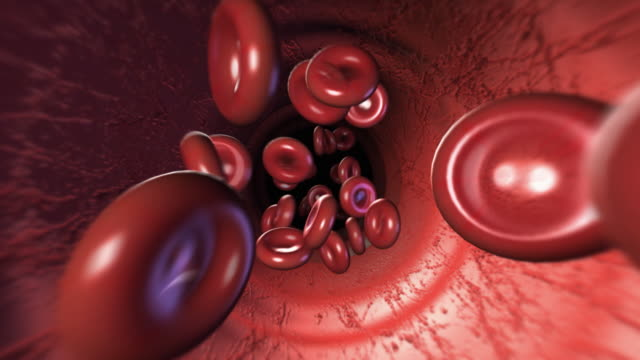 red blood cells - human vein stock videos & royalty-free footage