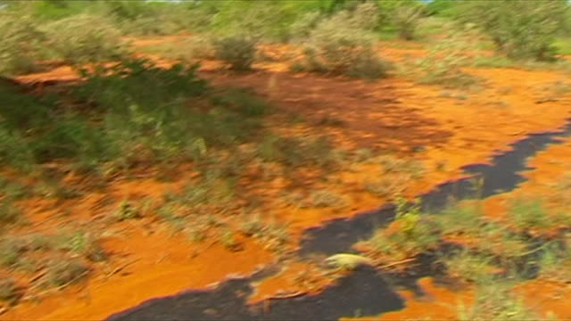 Red blood trail leading to elephant corpses poached for ivory