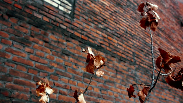 Red brick wall with dry plant near it
