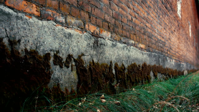 Red brick wall with foundation covered with old moss