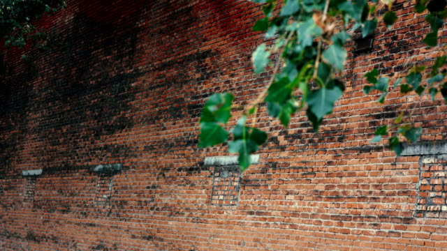 Red brick wall with Green branch near it