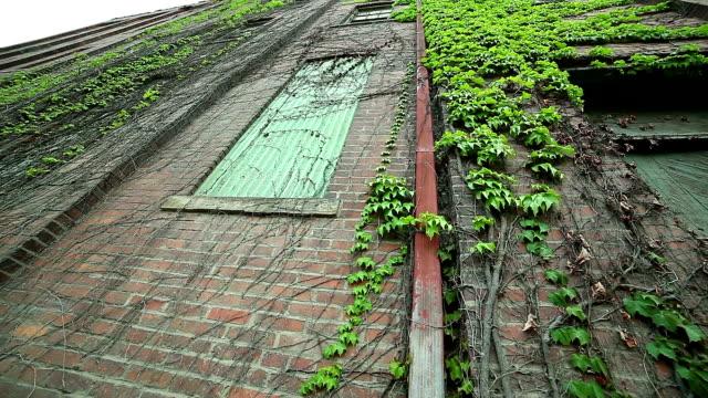 Roten Ziegelsteine alte Gebäude mit Grün Efeu an der Wand
