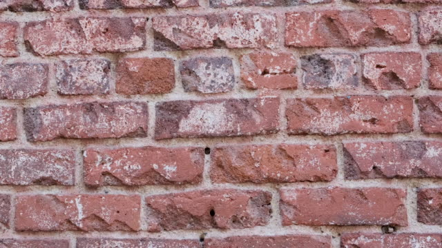 red bricks wall full frame panning background - brick wall stock videos & royalty-free footage