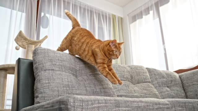 slo mo ld red cat jumping from the cat tree onto the sofa while trying to catch something on the floor - jumping stock videos & royalty-free footage