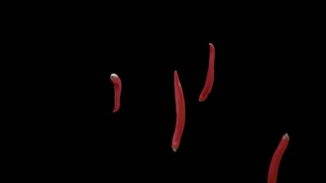 röd chili flyger och fallande slow motion. - krydda bildbanksvideor och videomaterial från bakom kulisserna