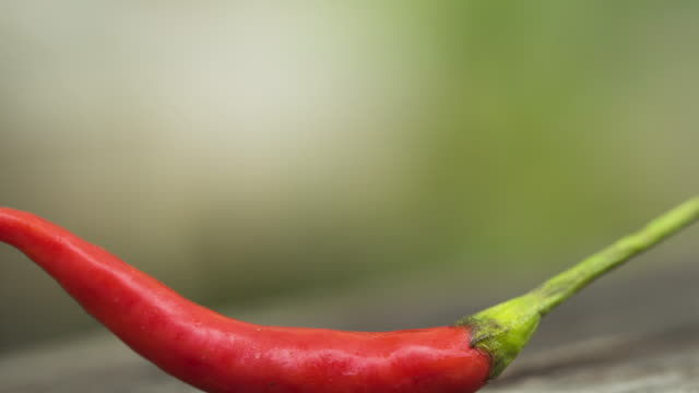 red chili pepper - peperone video stock e b–roll