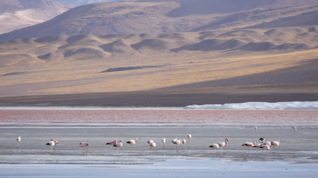 Red colored Lagune Atacama Bolivia