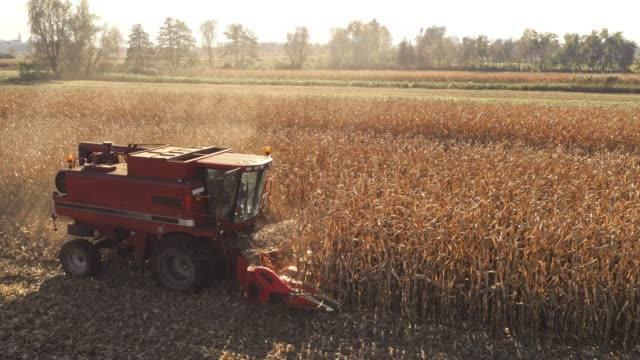 aerial red combine harvesting corn on sunny day - combine harvester stock videos & royalty-free footage