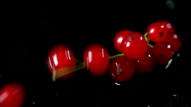 SLO MO Red currants falling down on wet surface