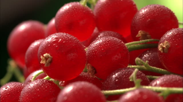 cu, selective focus, pan, red currents covered in dew  - currant stock videos & royalty-free footage