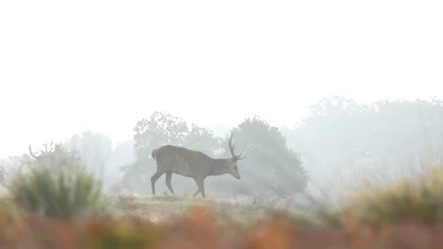 Red Deer attack