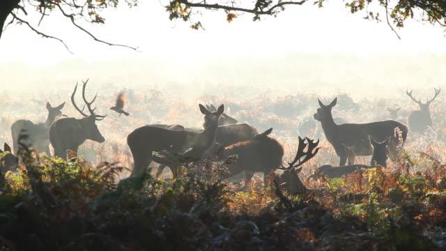 red deer in winter - wildlife stock videos & royalty-free footage