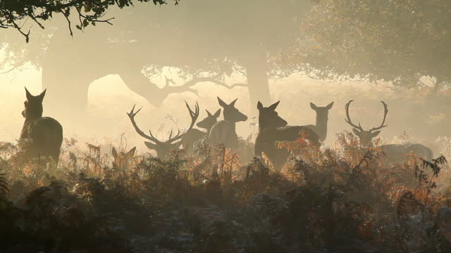 red deer in winter - frost stock videos & royalty-free footage