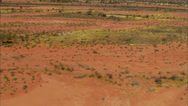 a red desert landscape is dotted with minimal vegetation in watarrka national park. - bush stock videos & royalty-free footage