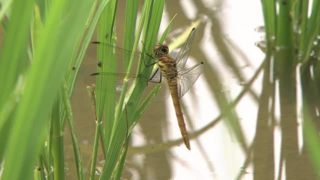 red dragonfly right after hatch - heckklappe teil eines fahrzeugs stock-videos und b-roll-filmmaterial