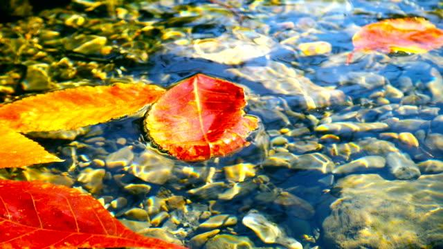 Rotes Blatt im Wasser