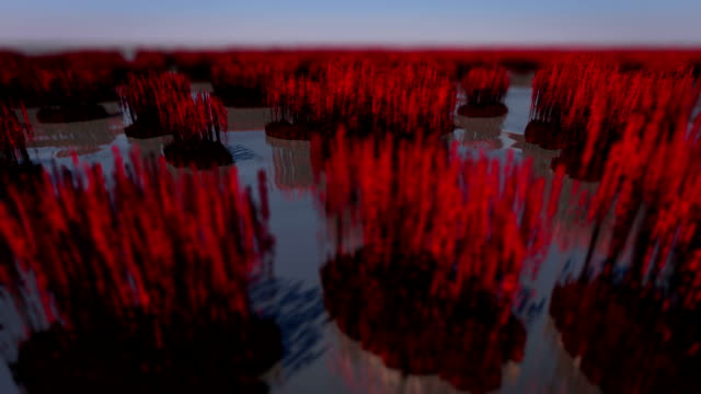 red flower carpet - 3d animation stock videos & royalty-free footage