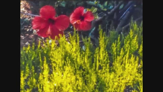 red flower detail - petal stock videos & royalty-free footage