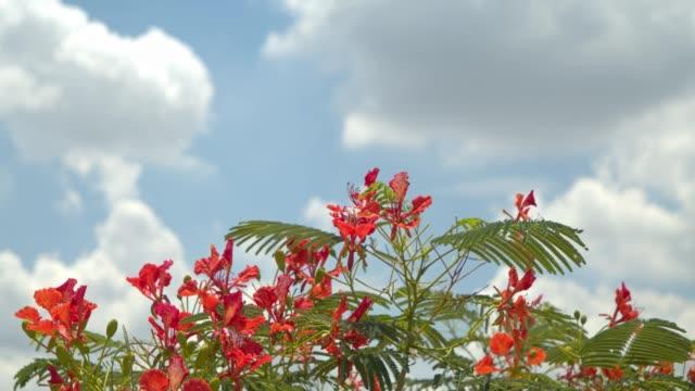 stockvideo's en b-roll-footage met rode bloem met blauwe hemel in zonnige dag.4k dci. beelden. - sunny