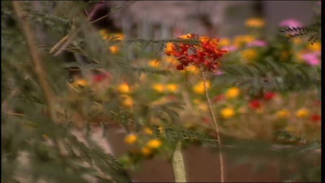 red flowers and other flowers in background in phoenix, arizona - other stock videos & royalty-free footage