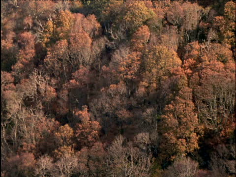 Red flushed forest in Autumn