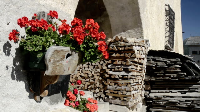 Red geranium flowers (pelargonium) and firewood in front of house