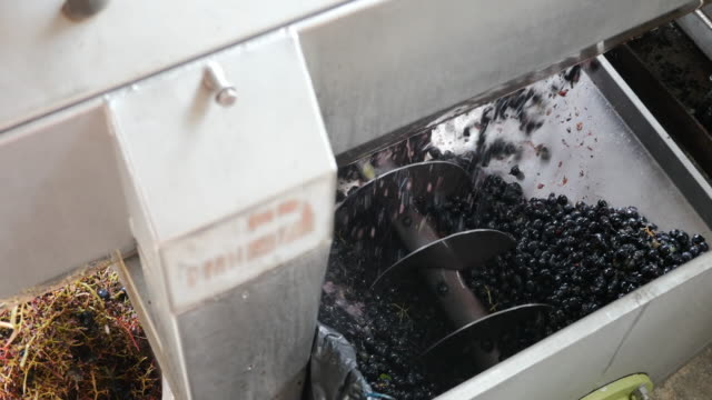Red grapes in a machine.