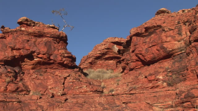 vídeos y material grabado en eventos de stock de ws red kangaroo (macropus rufus) ay rocks in kings canyon, northern territory, australia - arenisca
