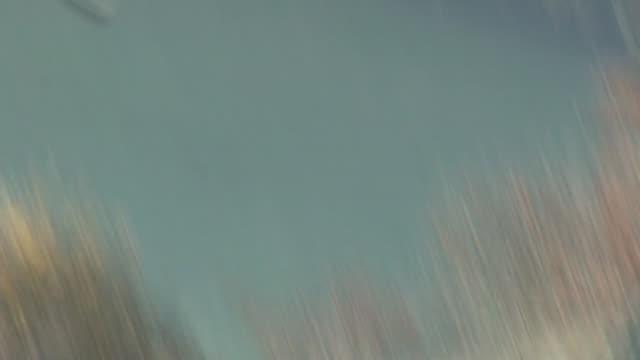 m40 motorway ext various shots red kite birds in flight - rotmilan stock-videos und b-roll-filmmaterial