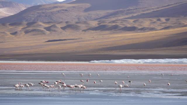 red lagune atacama bolivia - elektrizität stock videos & royalty-free footage