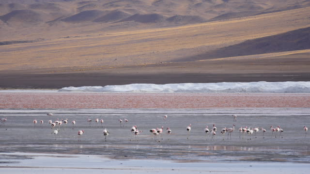 Red Lagune Atacama with flamingos in front