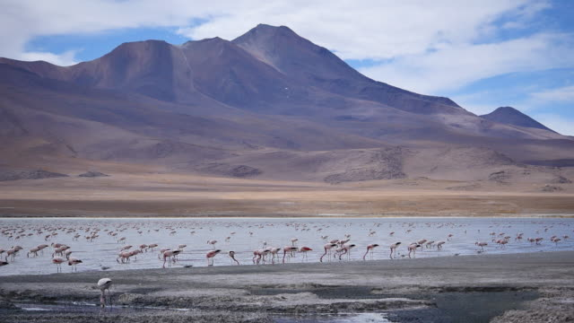 Red Lagune Atacama with Flamingos