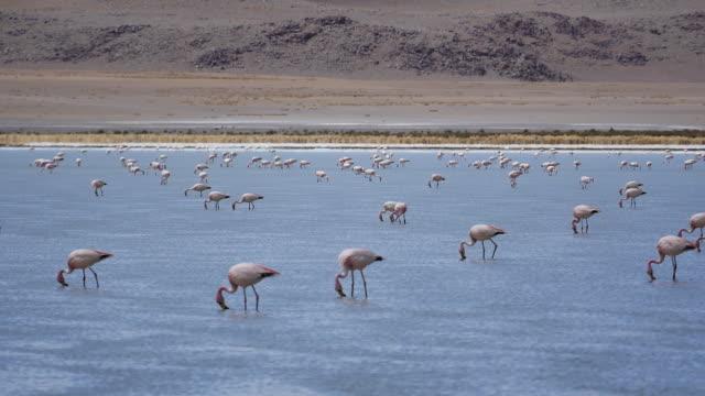 Red Lagune Bolivia