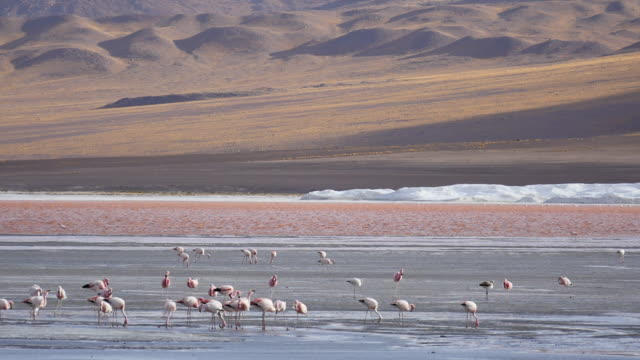 Red Lagune with flamingos