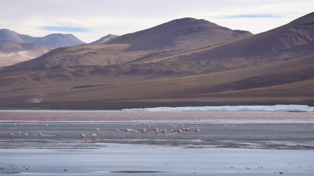 Red Lagune with hilly mountains and flamingos
