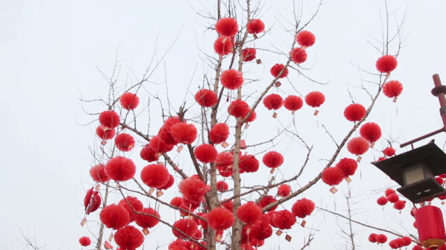 ms td red lanterns decorations on tree in park during chinese spring festival / xi'an, shaanxi, china - chinesisches laternenfest stock-videos und b-roll-filmmaterial