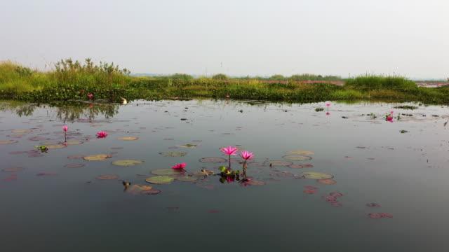 red lotus sea i thailand - korslagda ben bildbanksvideor och videomaterial från bakom kulisserna