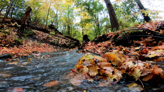 red maple leaf near a rushing stream  6 credits essentials collection  download this video clip includes our standard license. add an extended license. credit:pgiam  stock video id:1054035762 upload date:october 15, 2018 - falling water stock videos & royalty-free footage
