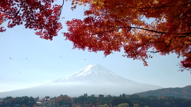 red maple leave with mt fuji in autumn season - maple leaf stock videos and b-roll footage