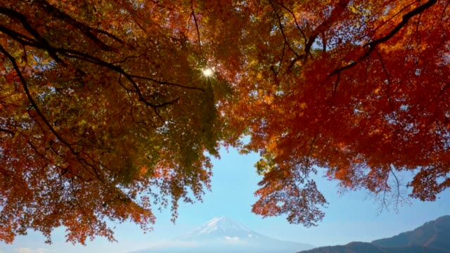 red maple leave with mt fuji in autumn season - satoyama scenery stock videos & royalty-free footage