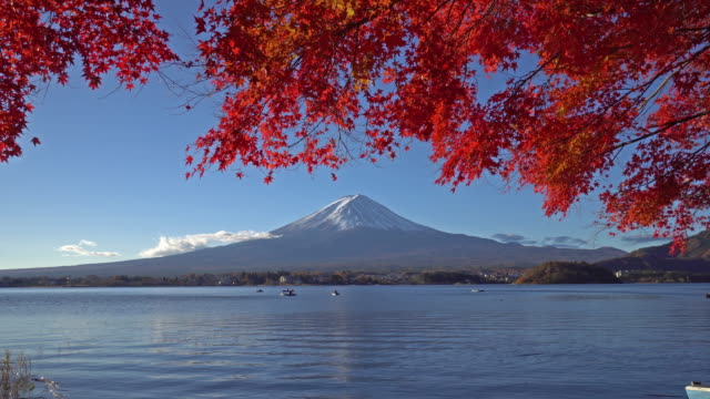 red maple leaves with mount fuji - autumn leaf color stock videos and b-roll footage