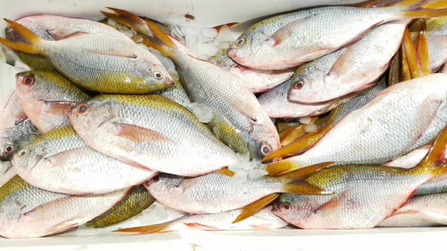 red mullet and yellowtail blue snapper on fish market display - triglia tropicale video stock e b–roll