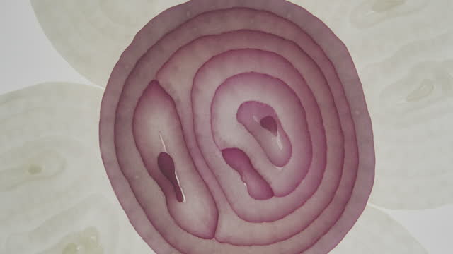 red onion - red onion stock videos & royalty-free footage
