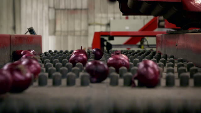 red onions in a processing plant, uk - red onion stock videos & royalty-free footage