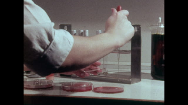 red petri dishes being prepared for bacteria testing; 1973 - archival stock videos & royalty-free footage