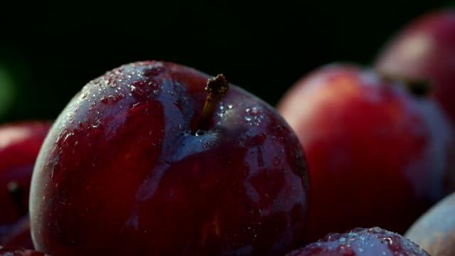 red plum - plum stock videos & royalty-free footage
