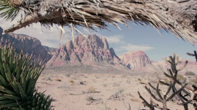 red rock canyon - 4k - cactus stock-videos und b-roll-filmmaterial
